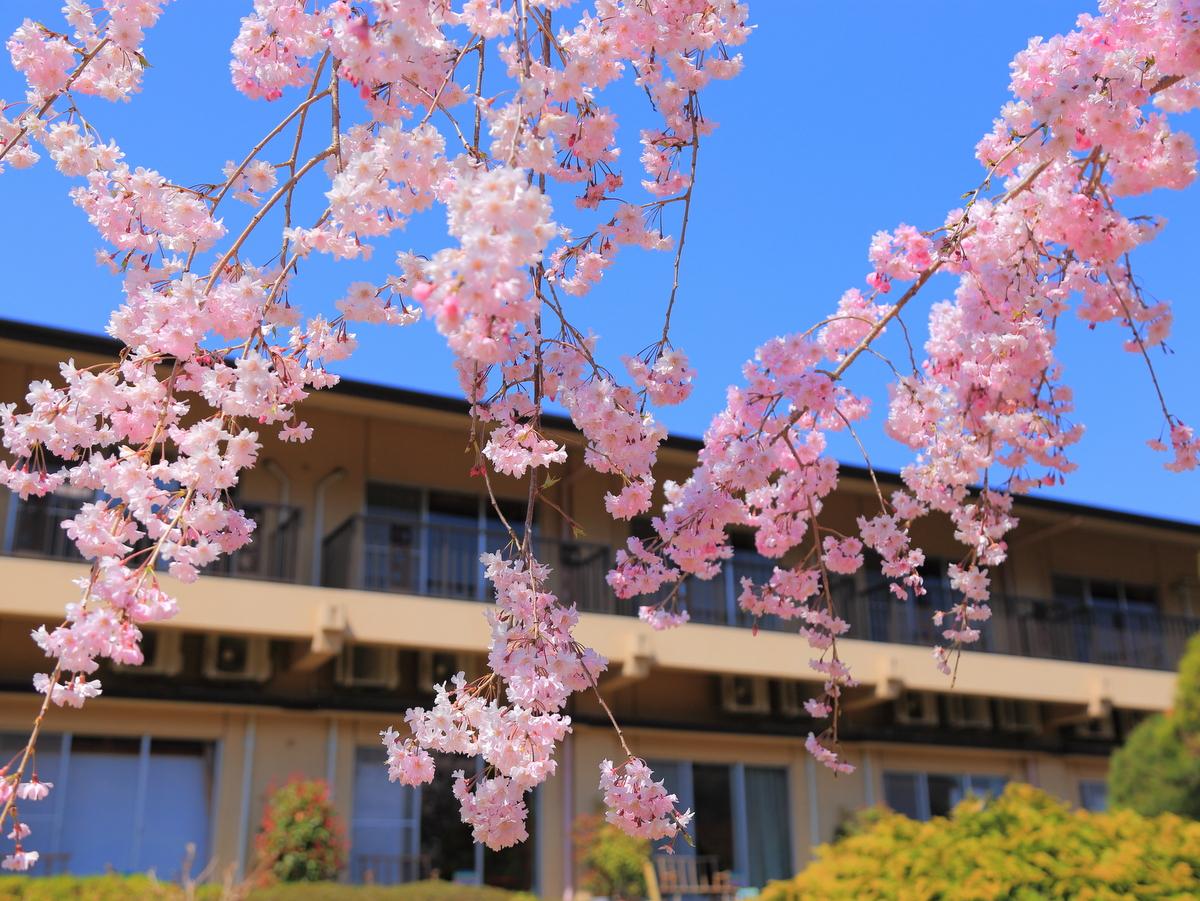 【春】庭園に咲くしだれざくら。