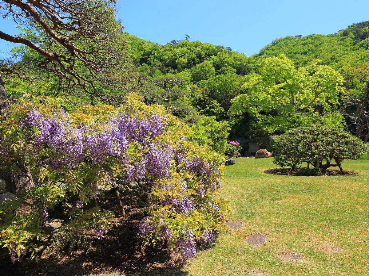 【春】季節には長瀞藤まつりが開催されます。