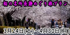 桜めぐり旅プラン
