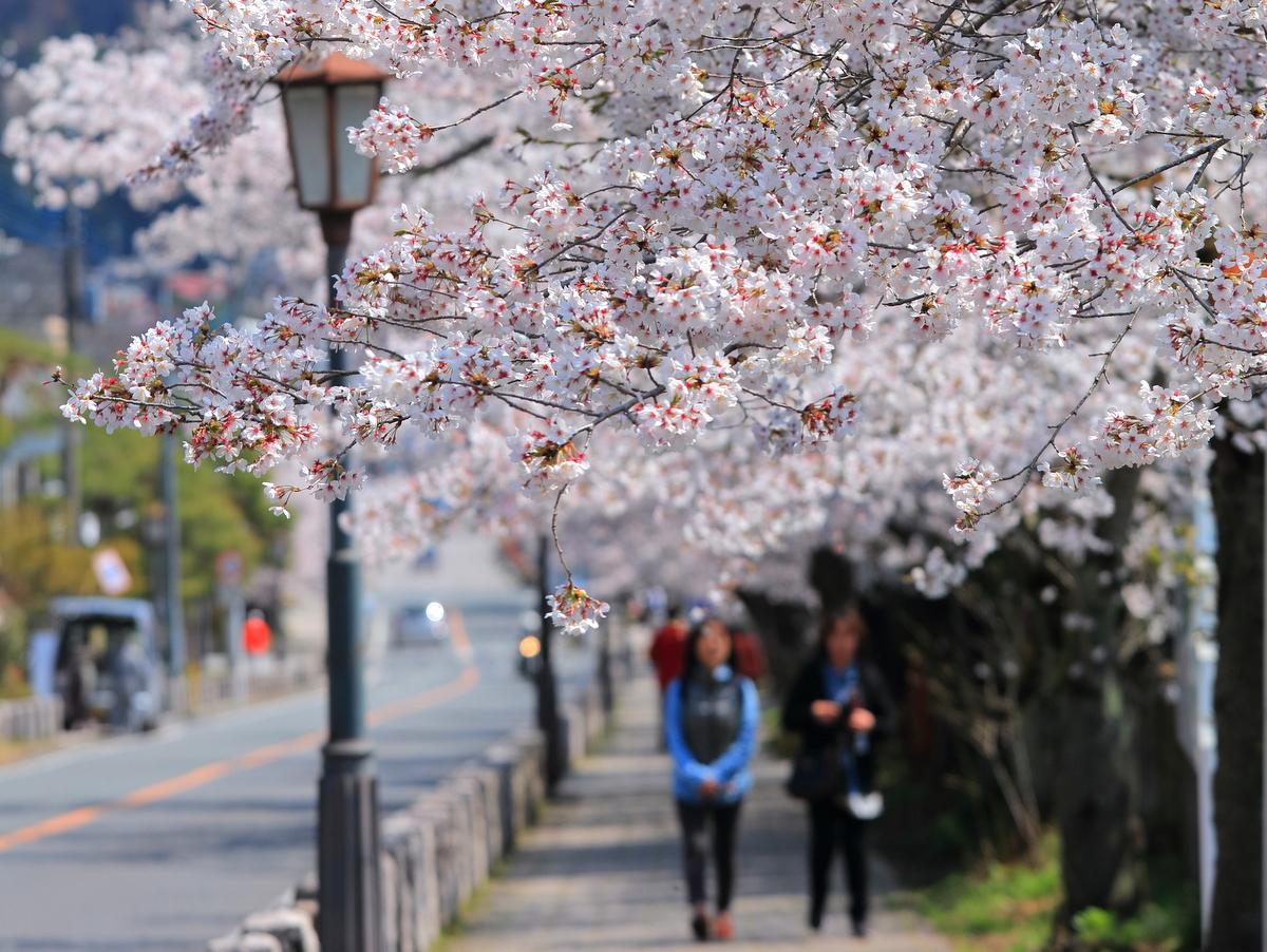 宝登山神社までのお散歩に最適です。