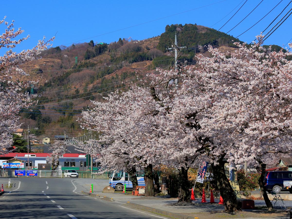 北桜通りから望める宝登山
