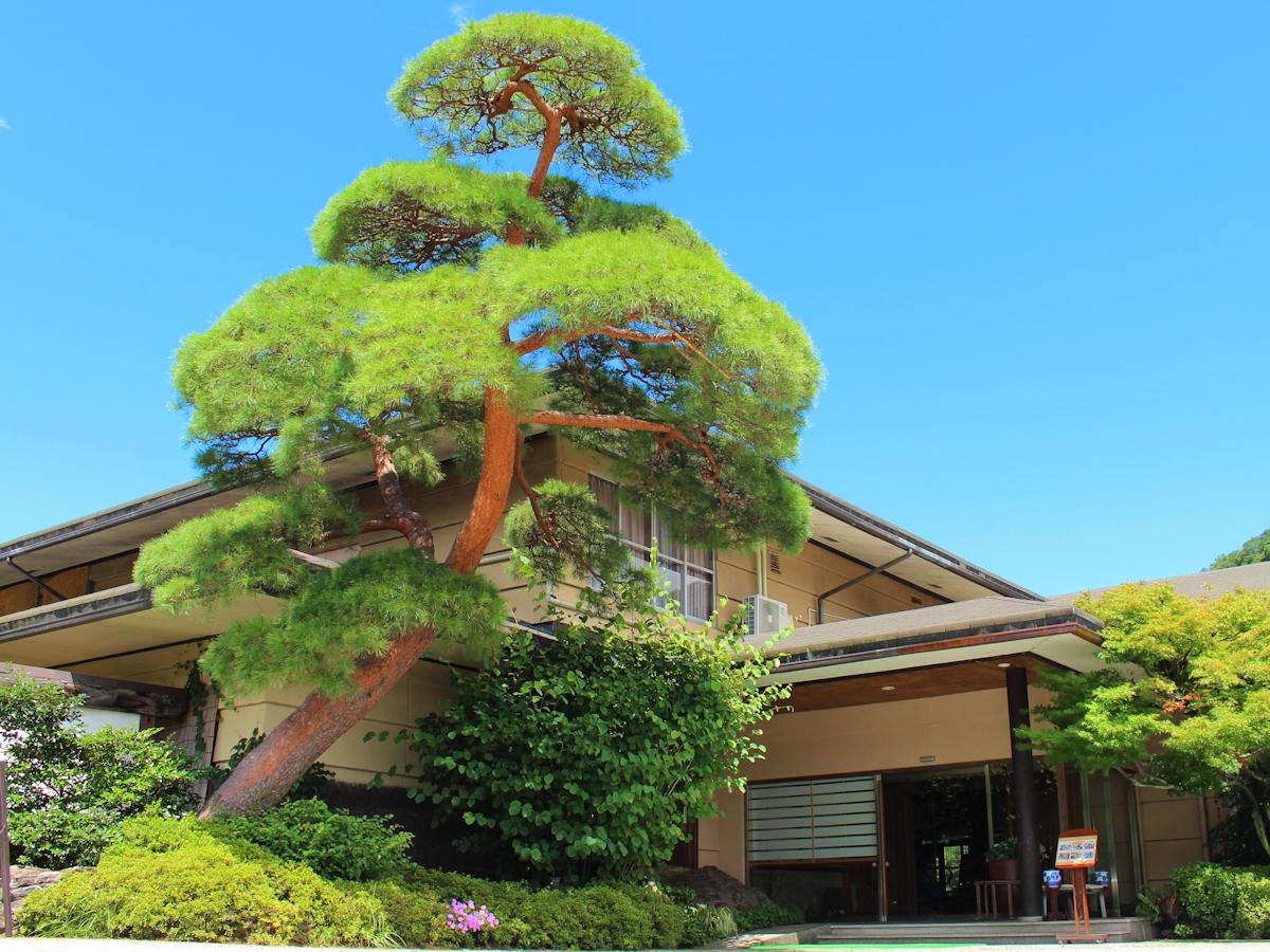 エントランスの赤松は樹齢100年。長生館の歴史そのものです。