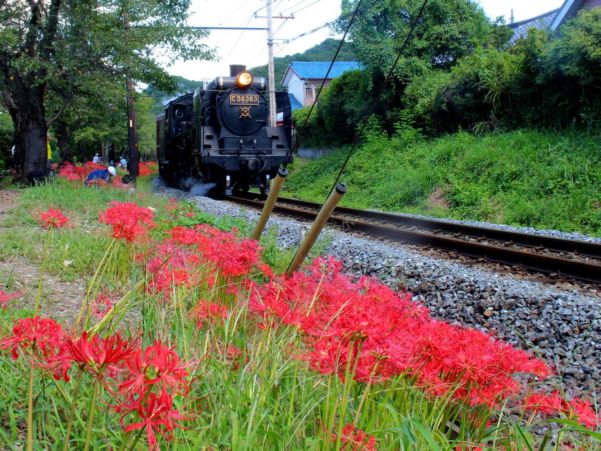 沿線を彩る風景や草木花にも注目!