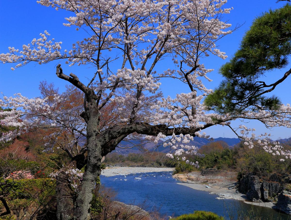 長瀞渓谷の景色とともにどうぞ。