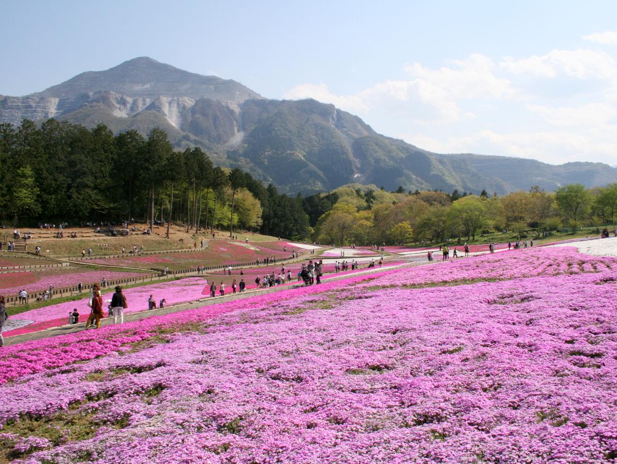武甲山も間近に迫り、写真映えします♪