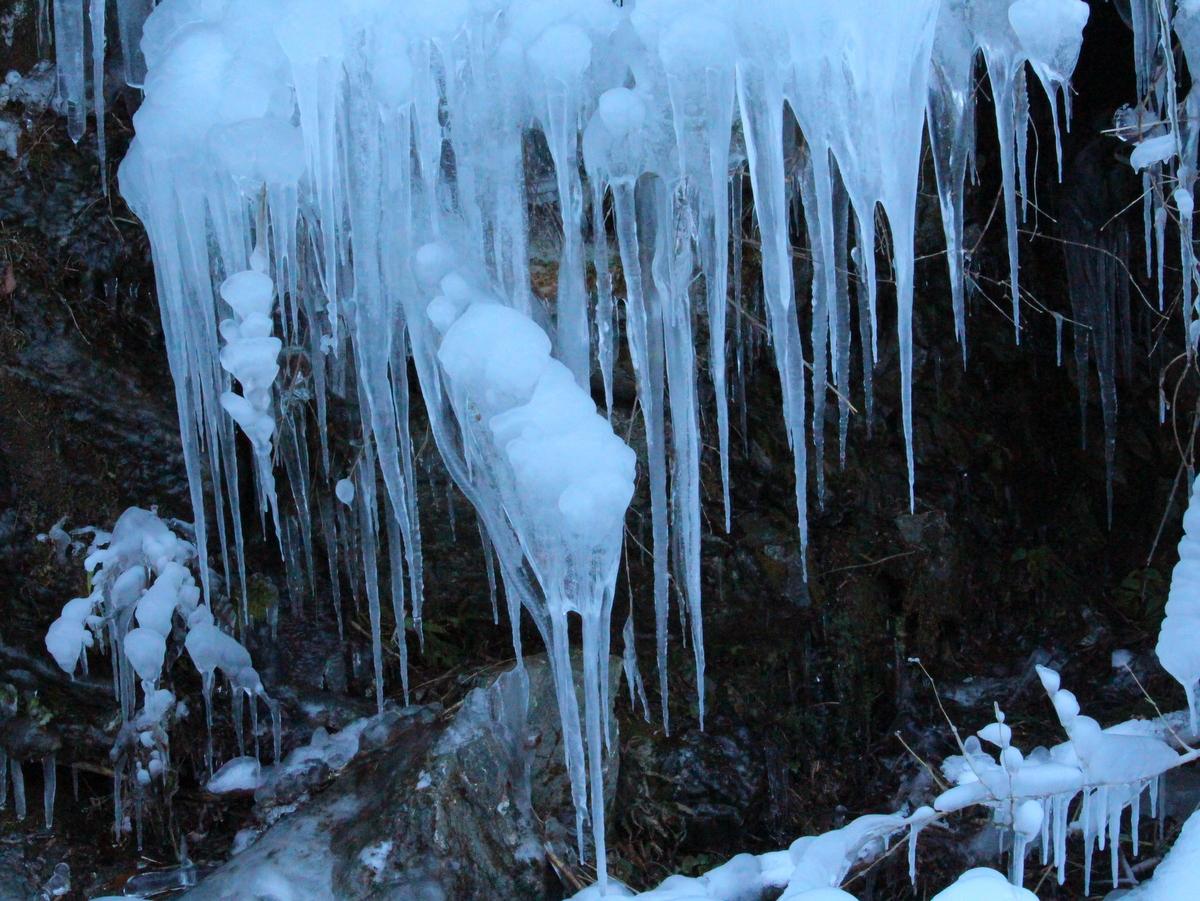 【芦】氷柱が一面に広がります。