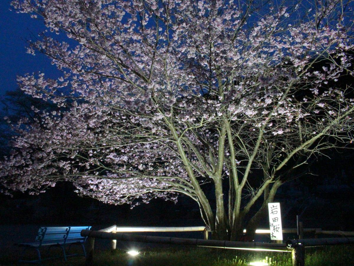 ベンチに腰を掛けての夜桜鑑賞も