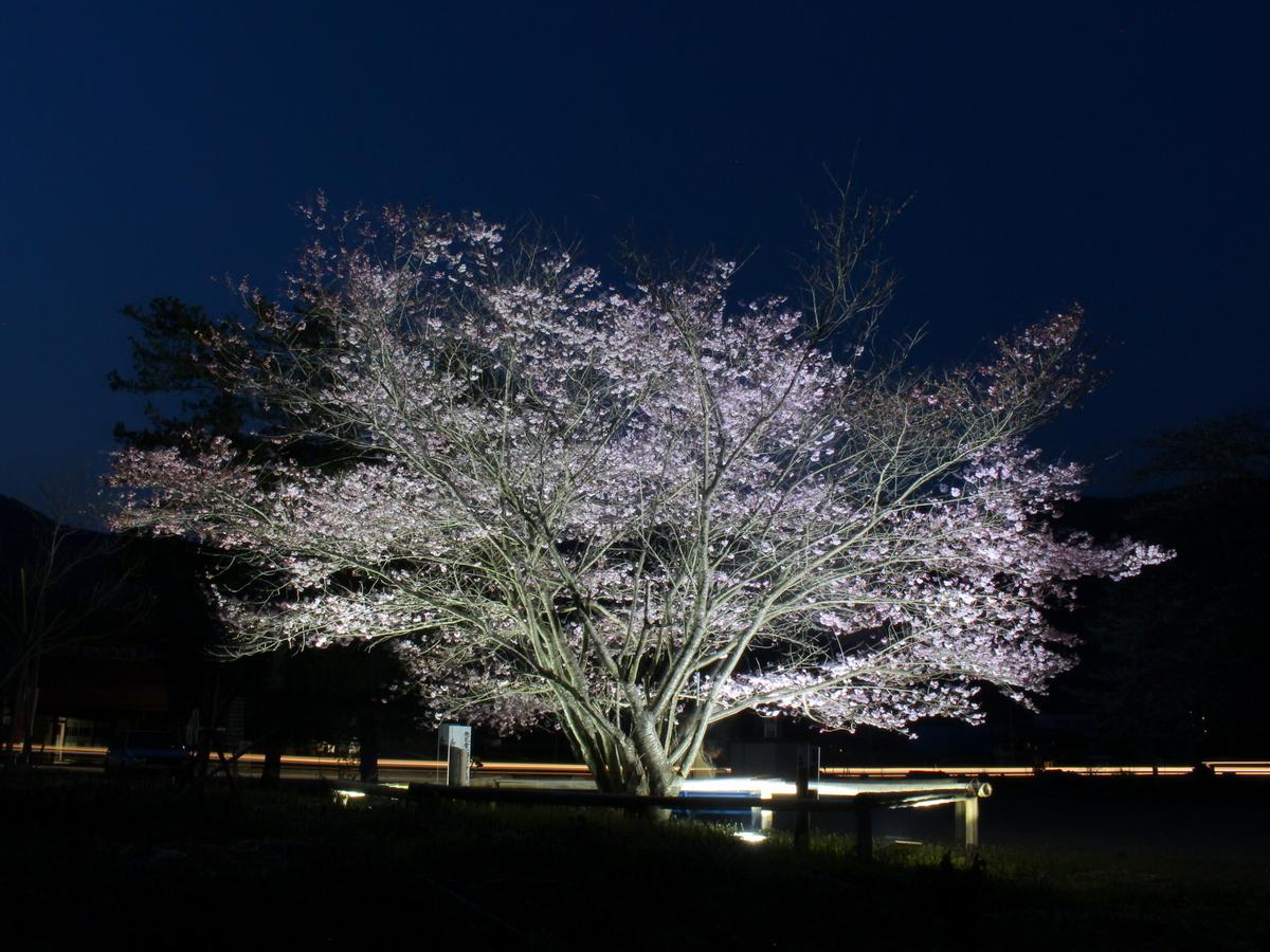 道光寺近くに咲く一本桜