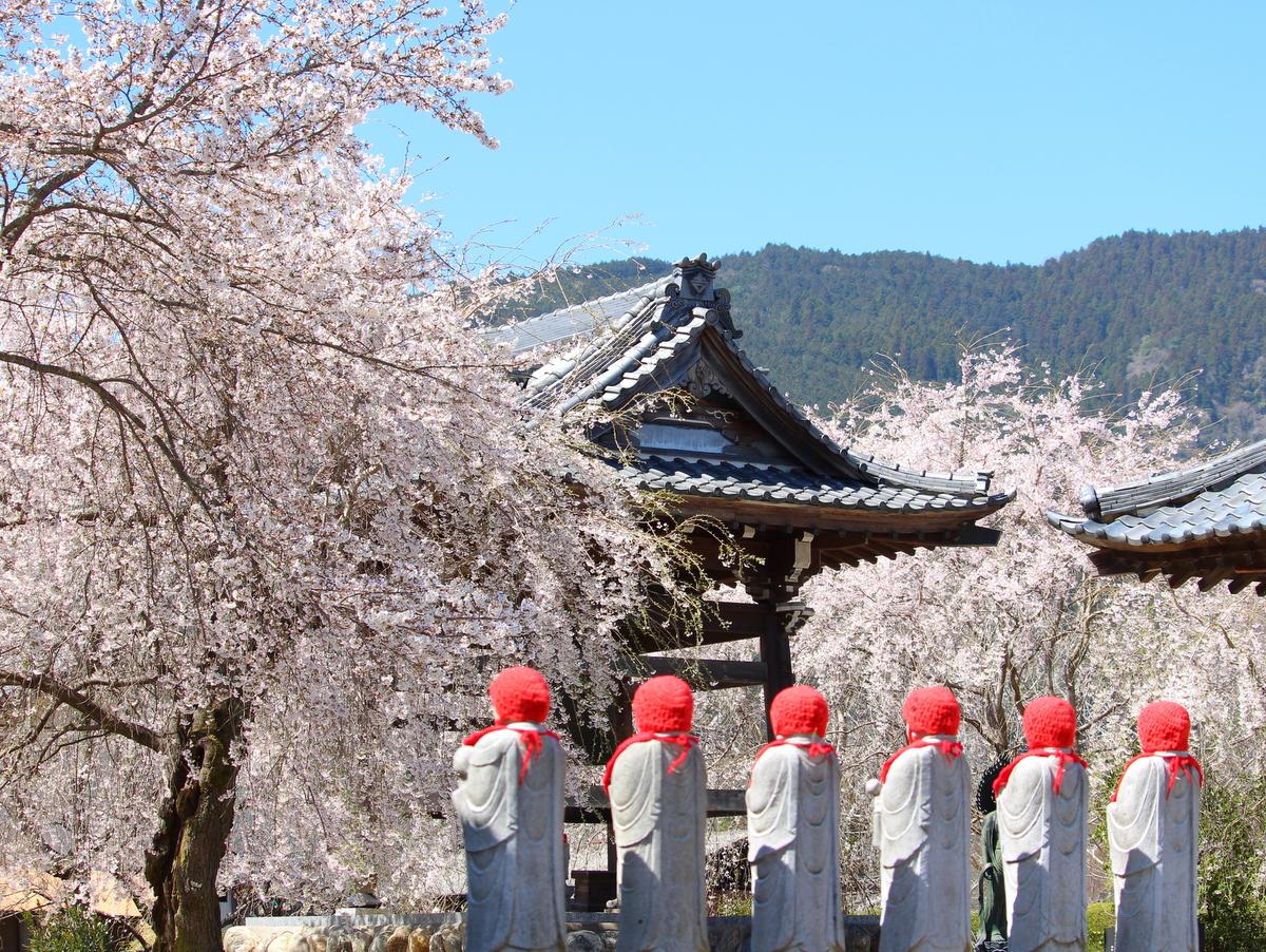 道光寺の枝垂れ桜もあわせてどうぞ。